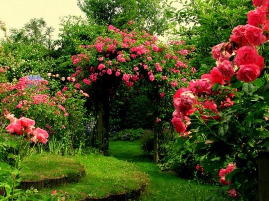 rosestonnelle-fleurs-3d08e73