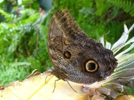 butterfly-602331_1920
