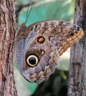 butterfly-892800_1920