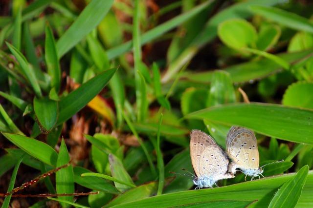butterfly-2406578_1920